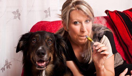 電子タバコが猫や犬に与える影響とは?ペットを飼っている人は要注意!