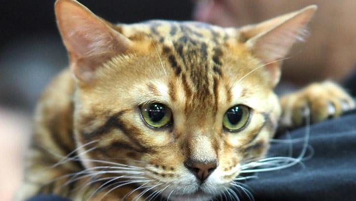 電子タバコが猫や犬に与える影響とは?